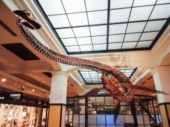 National_Museum_of_Nature_and_Science-_Futabasaurus